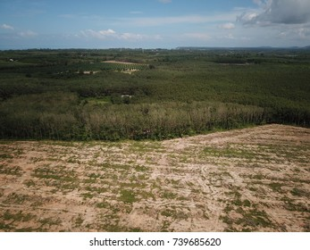 Deforestation. Logging. Environmental damage of forest, aerial view