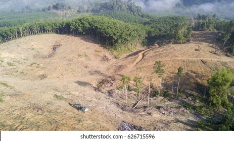 Deforestation. Logging. Environmental problem. Rainforest destroyed for palm oil industry