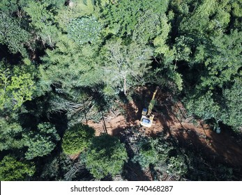 Deforestation. Logging. Excavator cutting down trees to make way for oil palm plantation