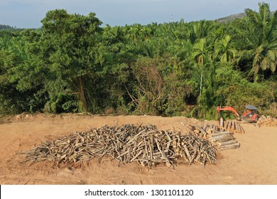 Deforestation. Logging of forest