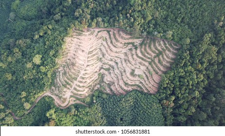 Deforestation. Logging of rain forest. Environmental destruction