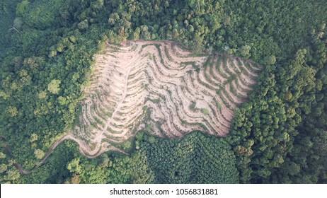 Deforestation. Logging of rain forest. Environmental destruction