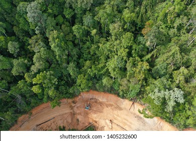 Deforestation. Logging of rainforest in Malaysia