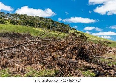 Deforestation in the mountain fields of Sao Jose dos Ausentes, Santa Catarina State, South Brazil