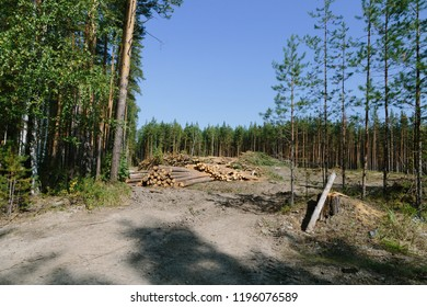 deforestation in the mountains of the Urals. Russia
