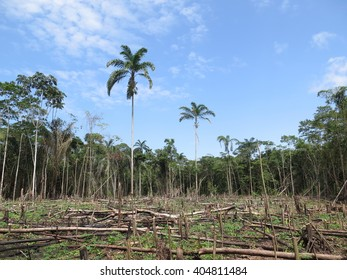 Deforestation in Peru Amazonia