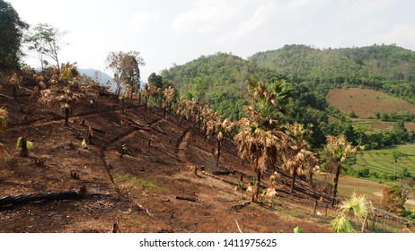 The deforestation problem caused from the expansion of highland farming area by ethnic groups (hill tribe people) in mountainous area of Northern Thailand.   Selective Focus and Blurred Background.