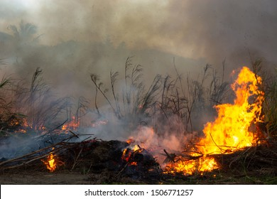 Deforestation of rainforest in Asia. Fire flame and big smoke, close-up. Wildfire while drought. Smoke and air Pollution from agricultural burning farm fields.