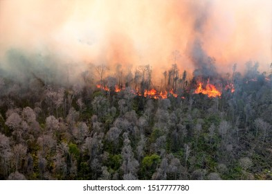 Deforestation of rainforest in Asia. Fire flame and big smoke, close-up. Wildfire while drought. Smoke and air Pollution from agricultural burning farm fields
