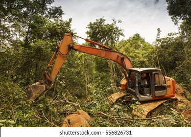 Deforestation of rainforest. Environmental problem. Borneo, Malaysia