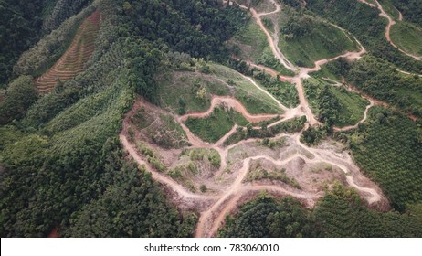 Deforestation. Rainforest forest jungle destroyed for oil palm plantations. Borneo, Malaysia