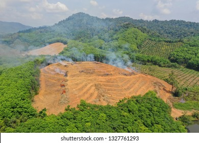 Deforestation. Smoke and fire as rainforest cut and burned for palm oil industry