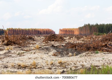 Deforestation. Uprooting of roots of trees. Chaotic deforestation in country with small economy leads to baldness and climatic natural disasters. Destruction of forest to illegal mining of amber.