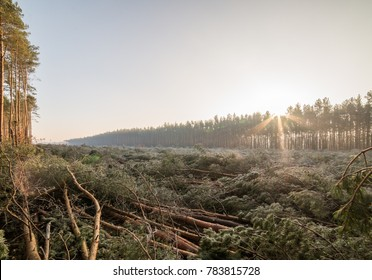 Deforested area in a forest with cutted trees, area is preparing for building highway - Warsaw's South ring road.