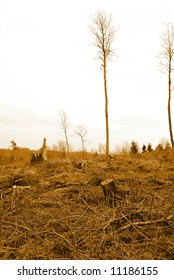 Deforested, disafforested, destroyed, desolated forest.