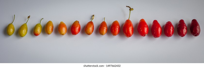The degree of ripeness of dogwood berries. From green to dark red. Dogwood - Shrub or tree with juicy edible sour-sweet red fruits, as well as its fruits.