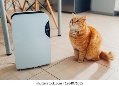 Dehumidifier with touch panel, humidity indicator, uv lamp, air ionizer, water container works at home while cat sitting by it on kitchen. Air dryer