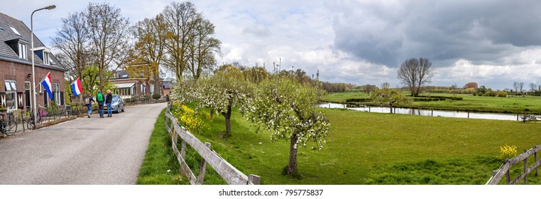 Deil, the Netherlands, april 27, 2017 - Panorama of houses and a road on a dike in Deil, Betuwe, Gelderland, along the Linge river in springtime, with flowering apple trees and hikers.