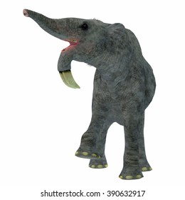 Deinotherium on White - Deinotherium was an enormous land mammal that lived in Asia, Africa and Europe during the Miocene to Pleistocene Periods.