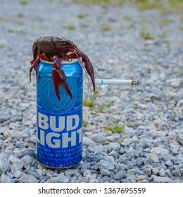 DELCAMBRE, L.A. / USA - APRIL 11, 2019: Crawfish smoking a cigarette on a beer can. Bud light beer can. Mudbug smoking in Delcambre, Louisiana.