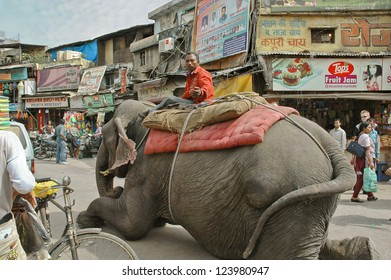 DELHI, INDIA - MARCH 18. Mahout on crowded street Main Bazar in Delhi, sits on top of a recumbent elephant, offer to sit on the elephant, on march 18, 2011 in Delhi, India.