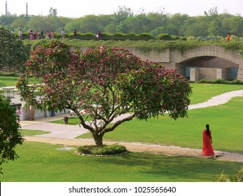 Delhi, India - May 01 2006: young indian woman in orange Sari walking on a way next to a beautiful blooming tree in the park of Gandhi Samadhi Area next to Raj Ghat