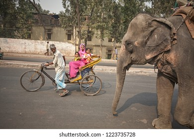 Delhi, India, November 2008. Elephants circulating through the streets of the old city.