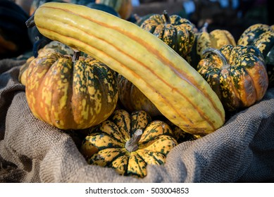 Delicata squash and Carnival squash for sale at a Farmers' Market.