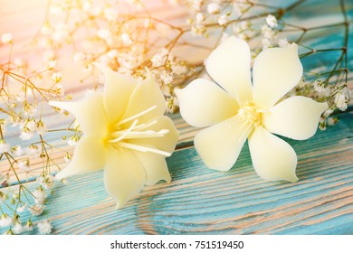 Delicate beige mastic flowers on blue wooden background, close-up