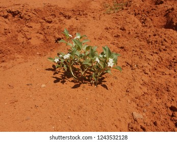 Delicate blooming plants on dry Monument Valley ocre soil - Navajo Nation