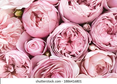 Delicate blossoming pink flowers, blooming roses festive background, bouquet pastel floral card, toned, selective focus