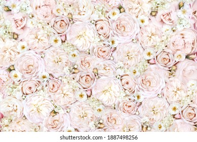 Delicate blossoming pink and white rose flowers wall, blooming pastel festive background, soft bouquet bridal floral card