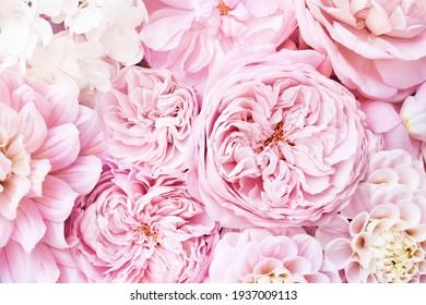 Zarte blühende Rose und Dahlienblumen, blühender pastellfarbener Hintergrund, weiche, hellrosa Blumenkarte, Ton