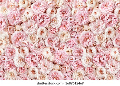 Delicate blossoming roses, blooming flower wall festive background, pastel and soft bouquet floral card, toned