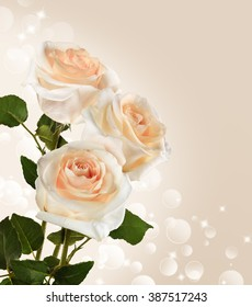 Delicate bouquet of roses on a light background