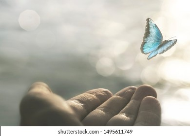 a delicate butterfly flies away from a woman's hand