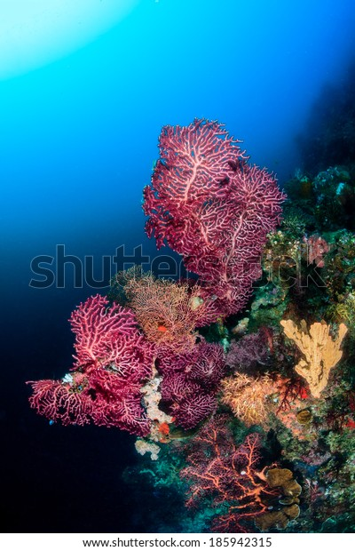 Delicate colorful soft corals on a deep reef wall