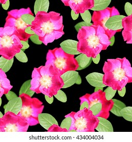 Delicate floral background. Pink dogrose
