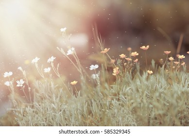 delicate floral meadow at sunrise