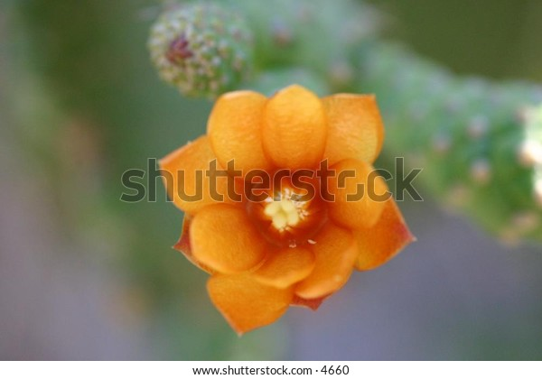 delicate flower on prickly catus
