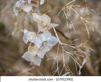 A delicate flower, still only a skeleton that looks like a snowflake. Soon spring will wake her up.