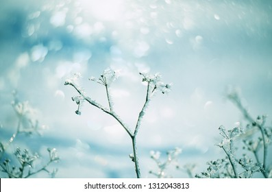 Delicate flower  with white frost. Artistic photo of winter flowers in the snow.    Soft selective focus.