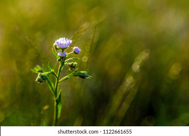 delicate flowers in the meadow