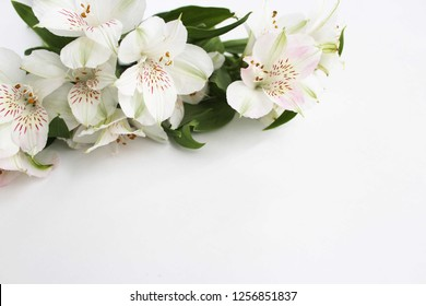 Delicate flowers of white Alstroemeria on white background. Pastel colors. The view from the top.