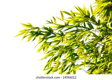 delicate leaves isolated on white background