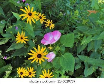 Luna Pink Swirl Hibiscus Images Stock Photos Vectors Shutterstock