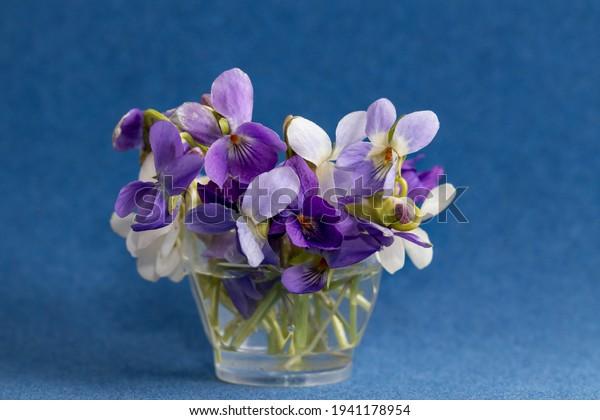 delicate-miniature-wild-viola-small-600w