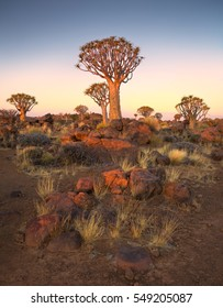 Delicate, pastel sunset over quiver tree forest, Keetmanshoop, Namibia