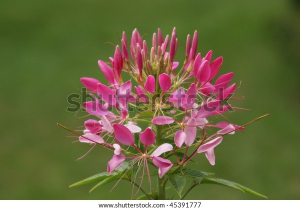 delicate pink flower