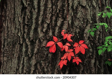 Delicate red leaves on a tree trunk